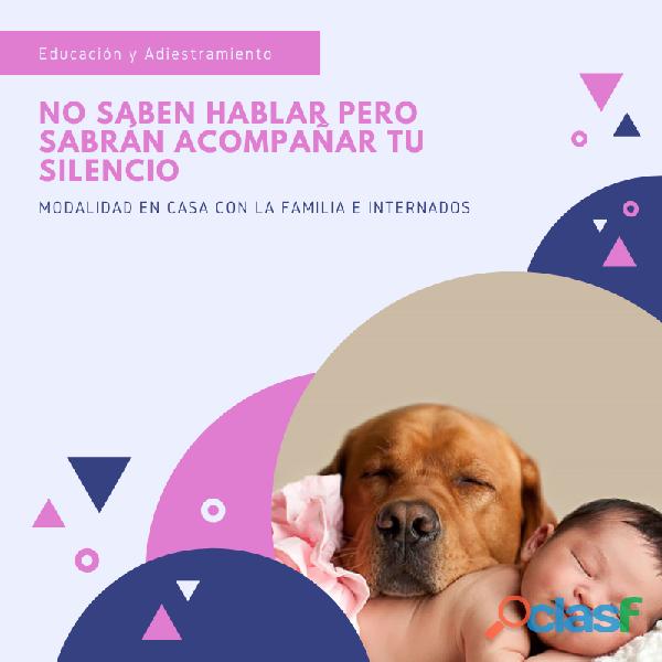 Educacion y Adiestramiento Canino 2