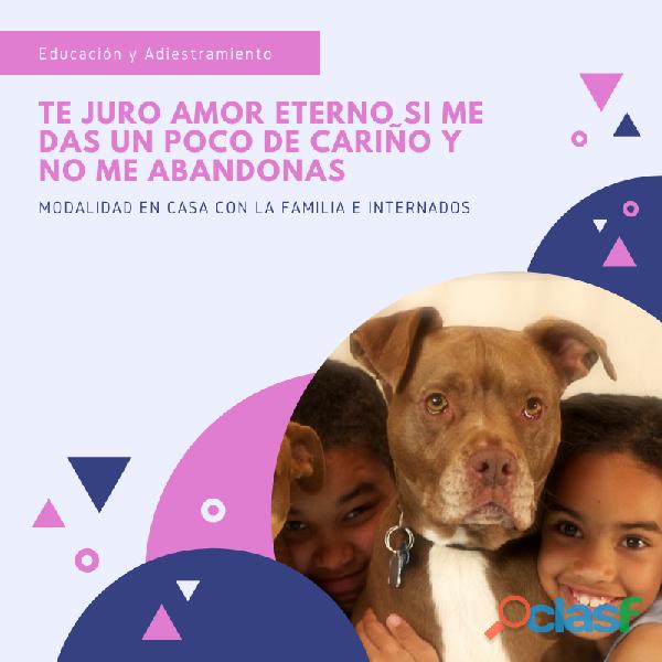 Educacion y Adiestramiento Canino 3