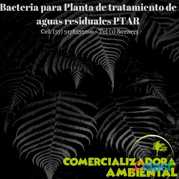 Bacteria trampa de grasa tel. 8022033