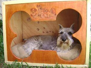 Peceras Casas Mascotas Anuncios Junio Clasf