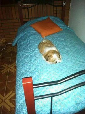 Camas sencillas colchon clasf for Colchon cama sencilla