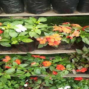 Jardinero experiencia anuncios noviembre clasf for Busco jardinero