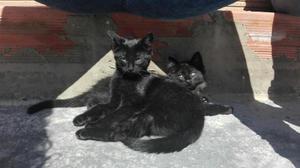 Adopta dos gatos - bogotá