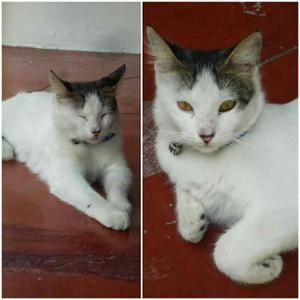 Adopta gatitos. - barranquilla