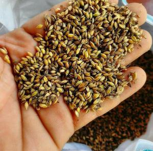 Venta semilla pasto clasf for Viveros frutales bogota