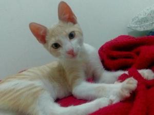 Bebe gaticos en adopcion responsable - cali