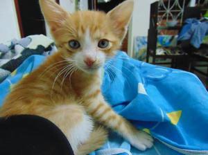 Gato macho en adopción - bucaramanga