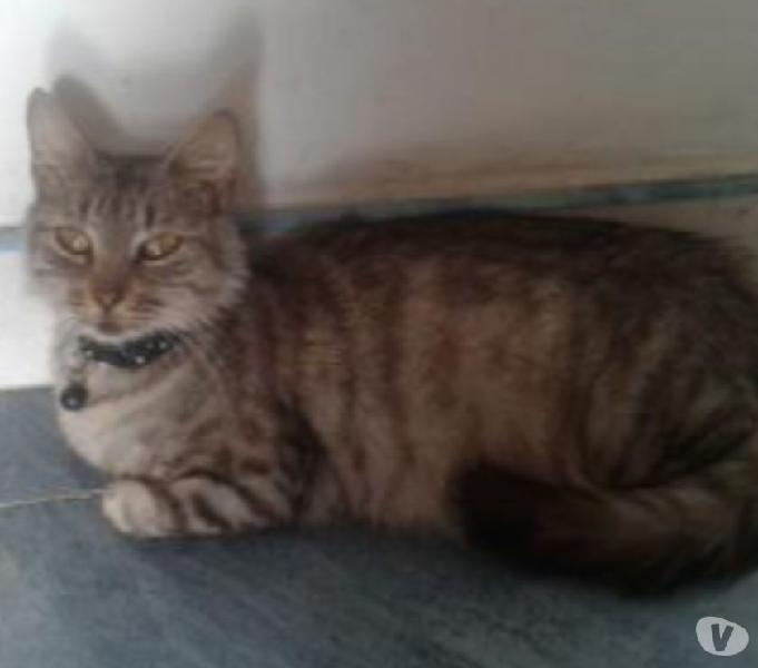 Apartato de gatitos en adopción, (aún no han nacido)