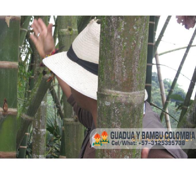 Curso de construccion con guadua bambu