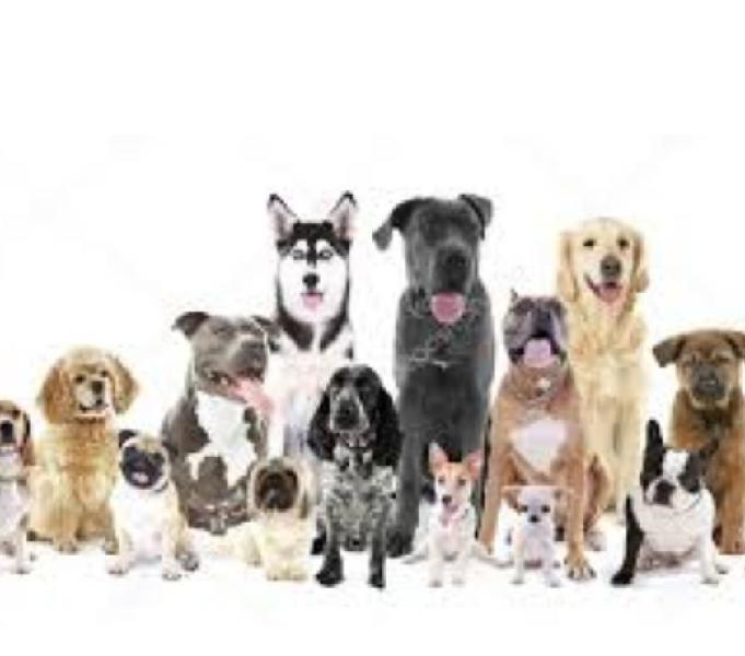 Paseadora de perros zona acacias