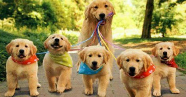 Paseadora de mascotas