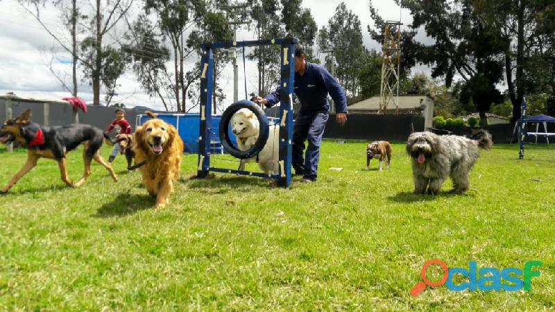 Adiestrador Canino Bogotá domicilio