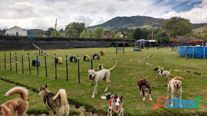 Colegio guardería canina bogotá