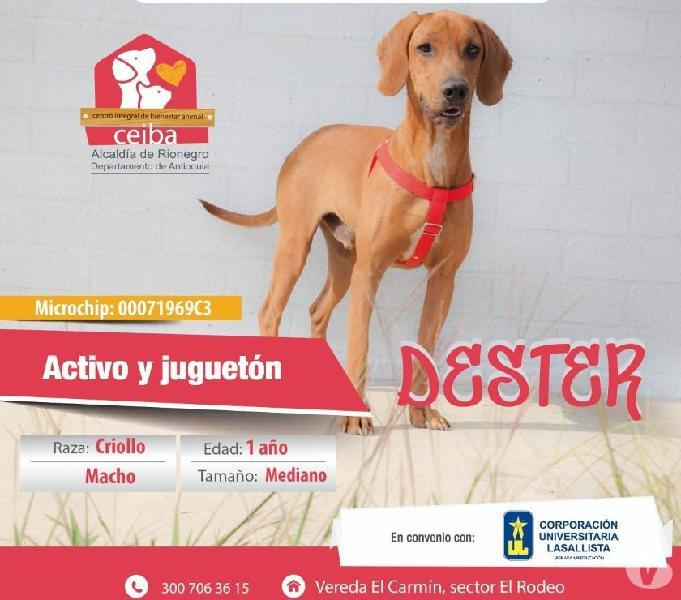 NO COMPRES, ADOPTA DE LOS REFUGIOS, ELLOS TE NECESITAN!!!