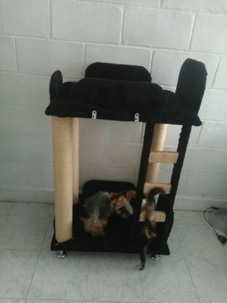 Camarote para gatos y perros