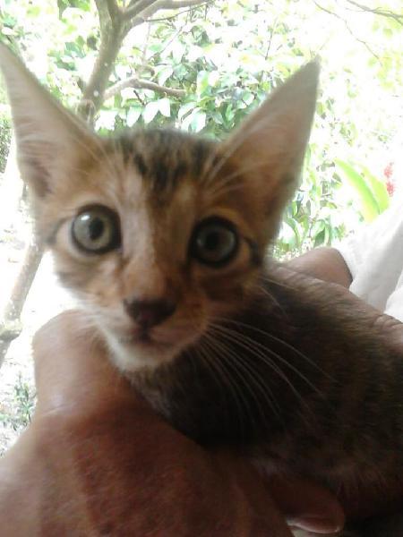 Gatitos adopción mariquita tolima