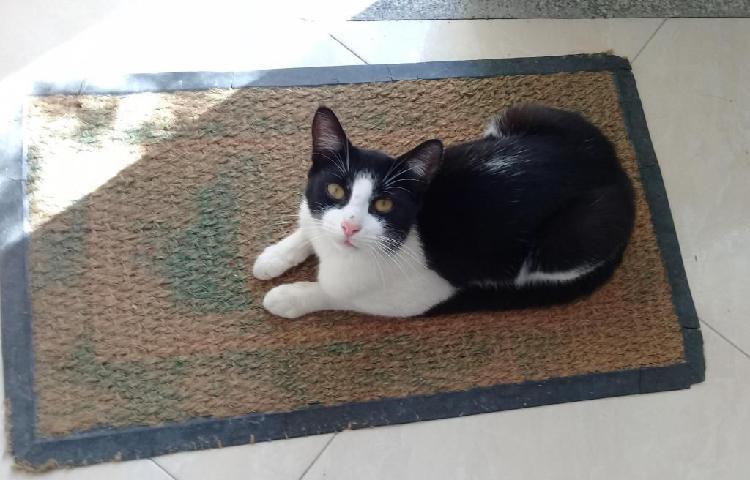 Gato macho en adopción