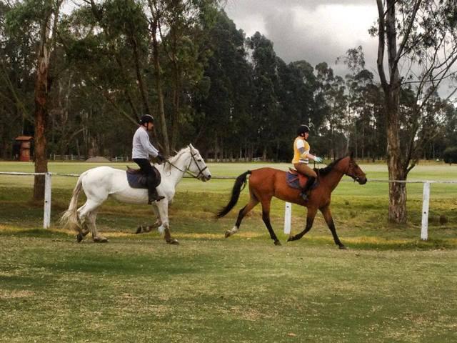 Cursos, clases de equitación para niños y adultos