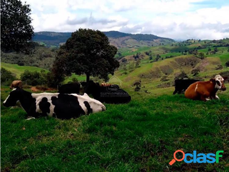 Finca especializada en producción de leche