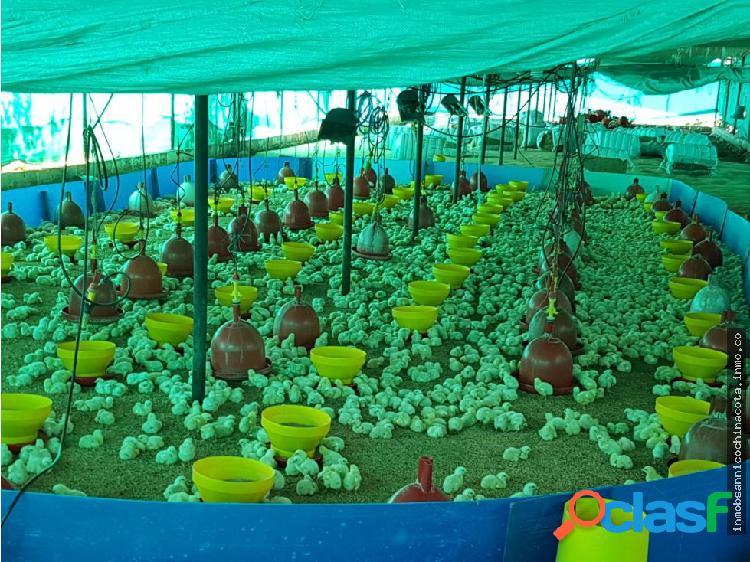 Vendo granja avicola en la garita