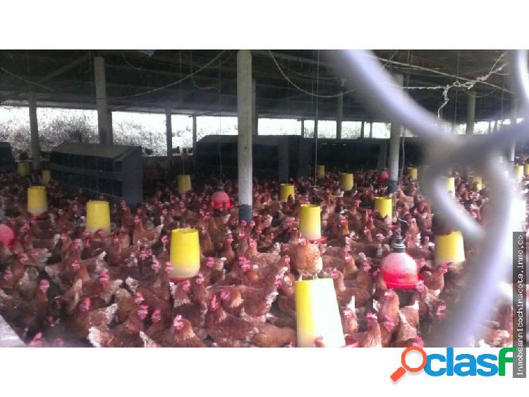 Vendo o permuto granja avicola en chinacota