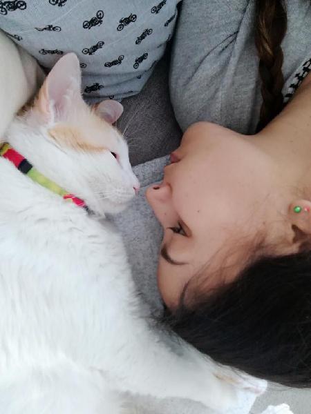 Niñera de gatos, cuidado en su hogar