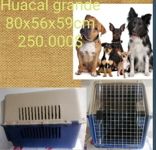 Perros grande guacal
