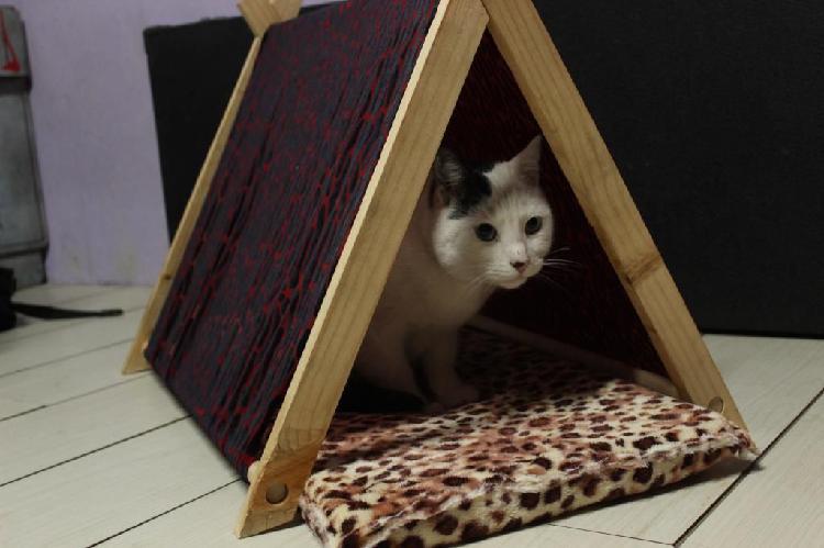 Casita para mascotas, casa para gato, pincher,perro