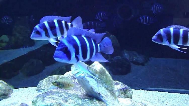Venta de peces en bogota economicos / gran variedad de