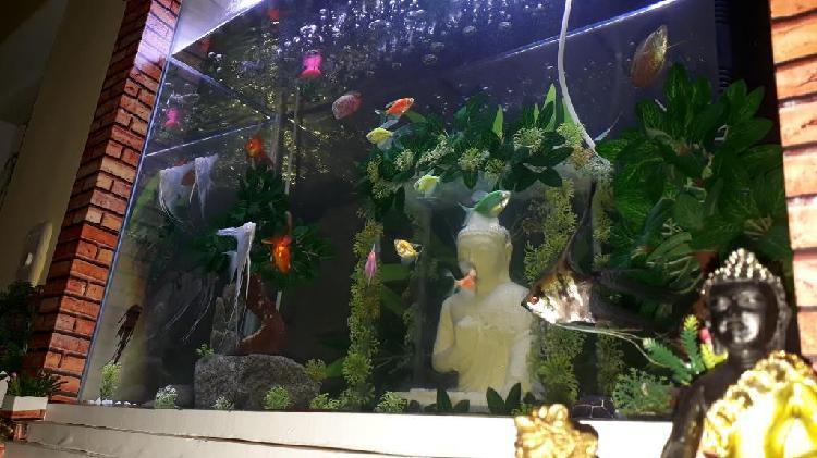 Acuario decorado completo con peces