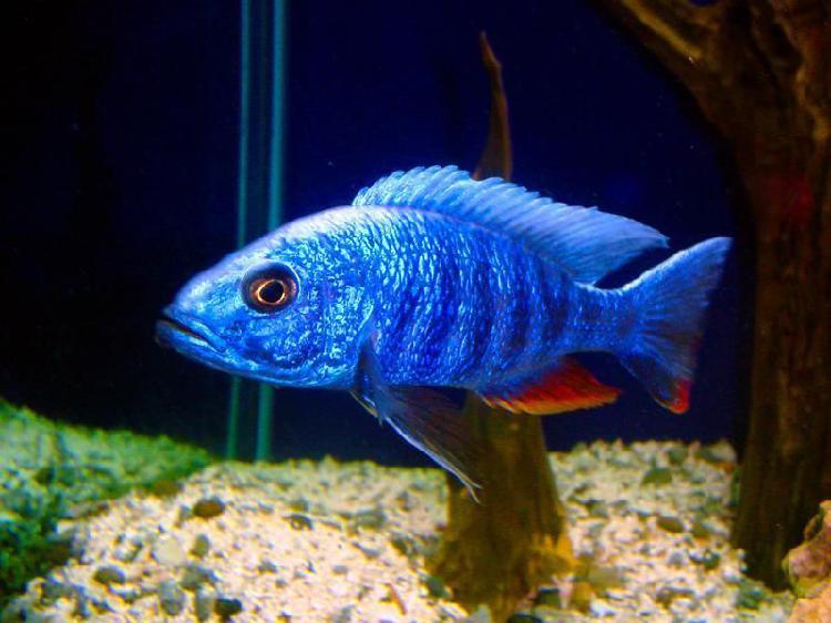 Venta de hermosos peces / diferentes tamaños / excelentes