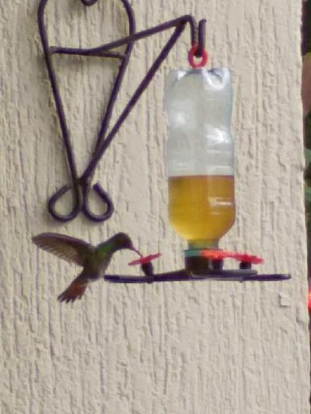 Bebedero decorativos funcional para colibri y aves de color