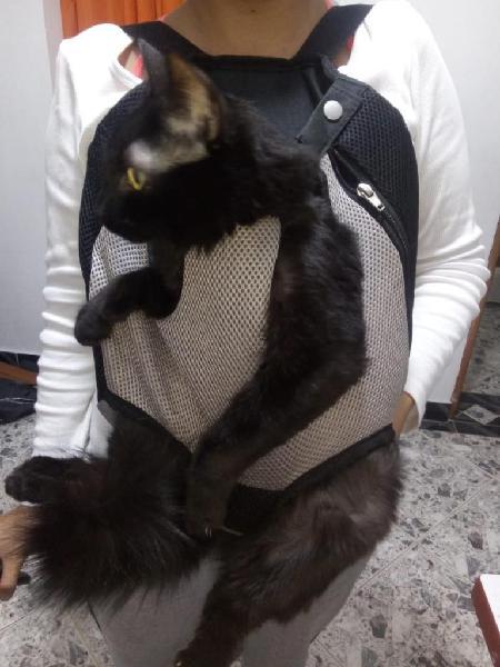 Bolso para mascotas