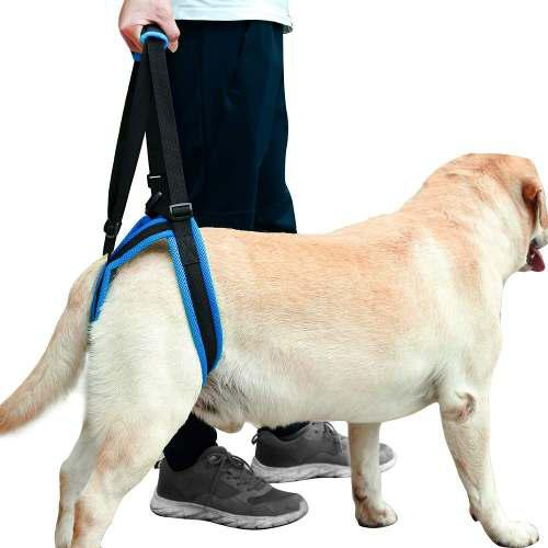 Perro cadera atrás arnés trasero soporte de pierna