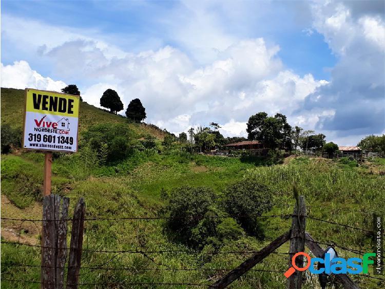 Finca productora 120 hectáreas (excelente acceso)
