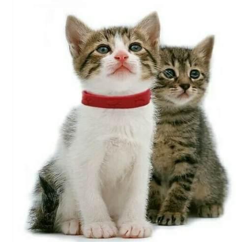 Collar anti pulgas gato perro pequeños
