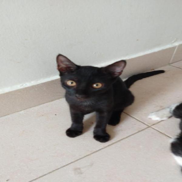 Adopcion gatos