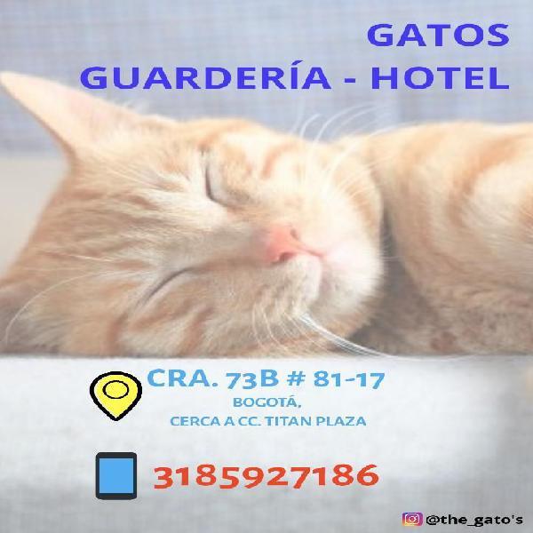 Hotel guardería gatos