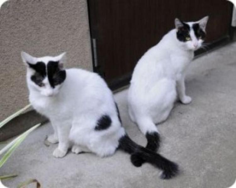Se regala gatito blanco con negro