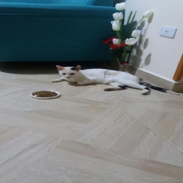 En adopcion gatica