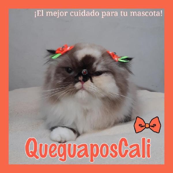 Peluquería felina cali #queguaposcali