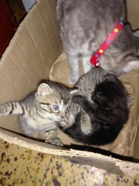 Regalo hermosos gatitos