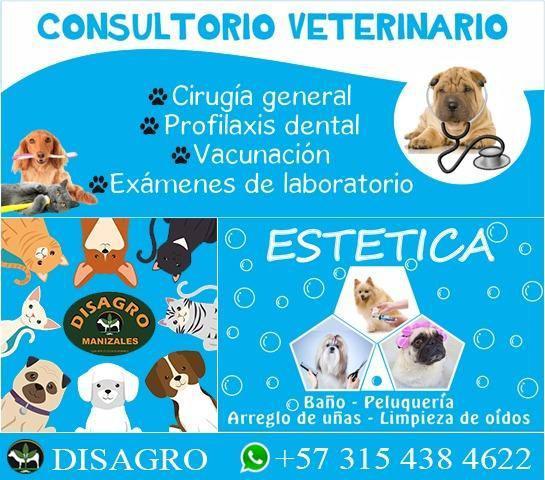 Servicio veterinario, estética, y mucho más