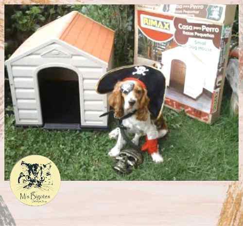 Casas Para Perros - Rimax