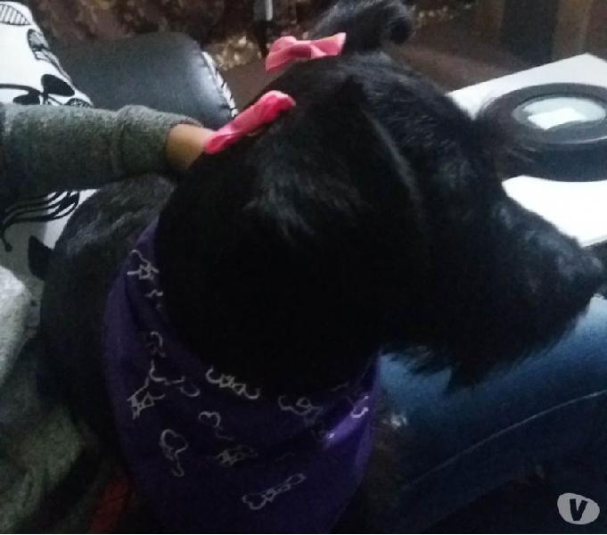 Hermosa perrita rescatada busca un hogar