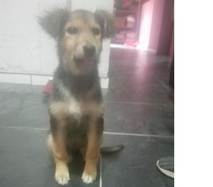Se da en adopcion esta perrita encontrada el dia martes 12