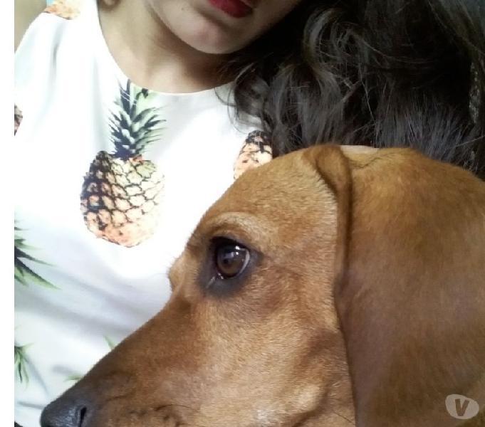 Servicio paseo perros - laureles y la américa medellin