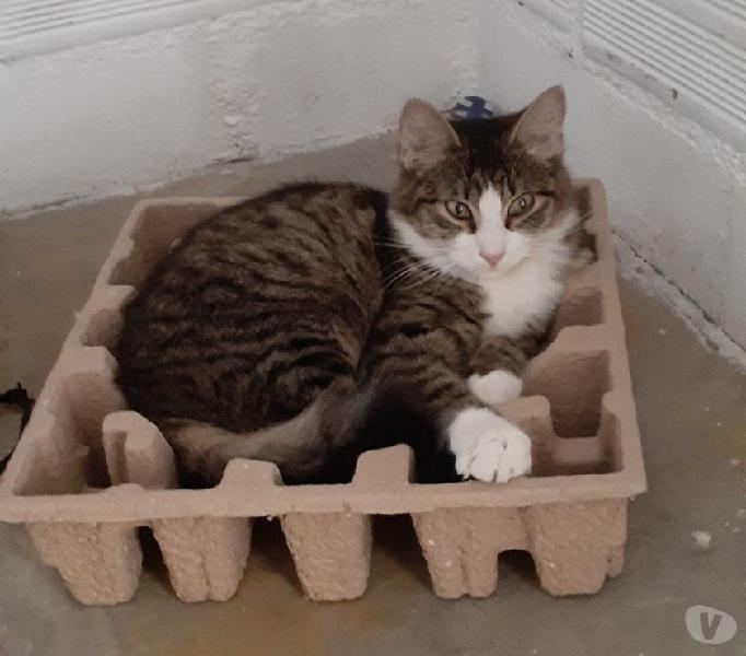 Se da en adopción una gata