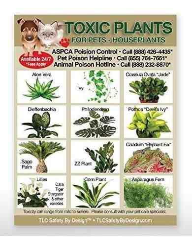 Plantas toxicas veneno para mascotas perros solo hogar de in