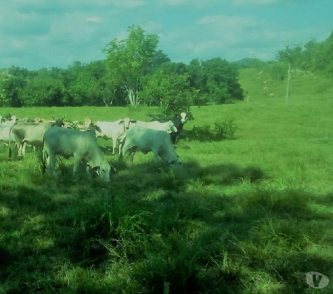 Se vende finca agropecuaria economica de 150 hectareas